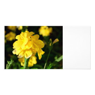 yellow flowers close up floral nature picture photo cards