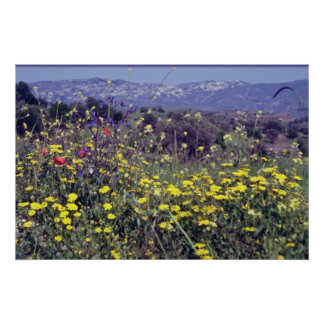 yellow Flowers, Cyprus flowers Poster