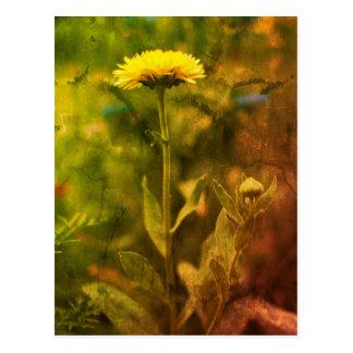 Yellow flowers: Dandelion Postcard