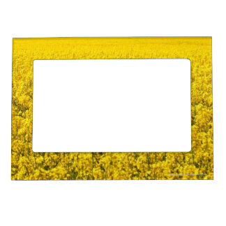 Yellow Flowers Field Magnetic Photo Frames