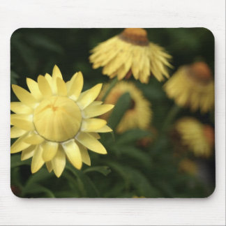 Yellow flowers in bloom mouse pad