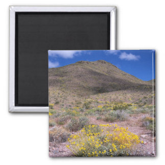 Yellow Flowers in Death Valley 2 Inch Square Magnet