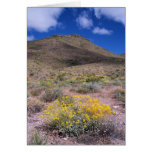 Yellow Flowers in Death Valley Greeting Card