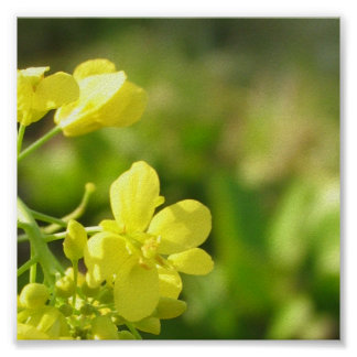 Yellow flowers macro photography posters