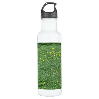 Yellow flowers of dandelions on a grassy landscape stainless steel water bottle