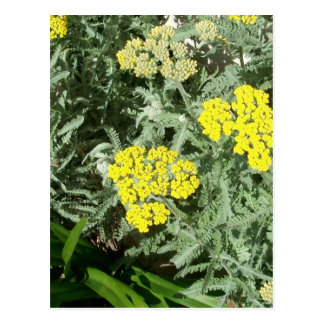 Yellow Flowers Postcard