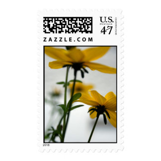 Yellow Flowers - Solaire - Floral Photography Postage Stamp