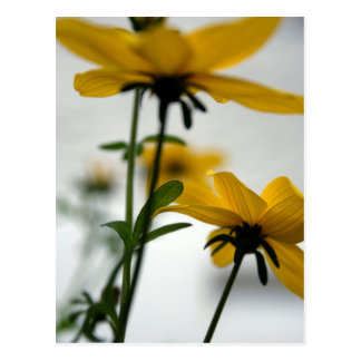 Yellow Flowers - Solaire - Floral Photography Postcard