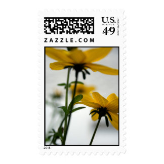 Yellow Flowers Solaire Floral Photography Stamp