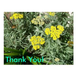 Yellow Flowers Thankyou Postcard