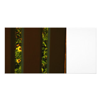 Yellow flowers through wide brown fence photo greeting card