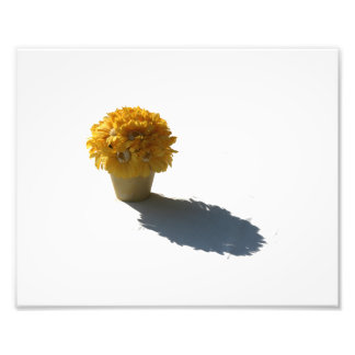 Yellow Flowers White Bucket and Shadow Cutout Photo Print