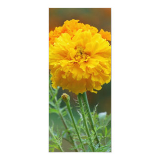 Yellow Fluffy Marigold Flower Card