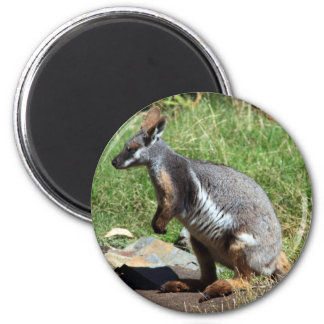 Yellow-Footed Rock Wallaby, Australia 2 Inch Round Magnet