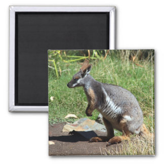 Yellow-Footed Rock Wallaby, Australia 2 Inch Square Magnet