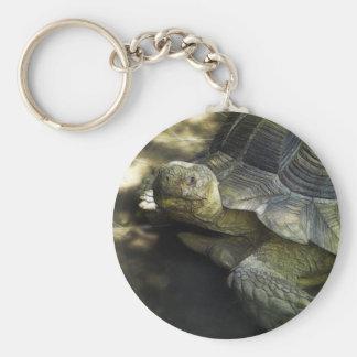 Yellow-footed Tortoise 1 Basic Round Button Keychain