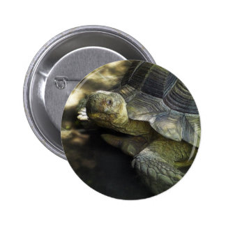 Yellow-footed Tortoise 1 Button