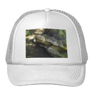 Yellow-footed Tortoise 1 Trucker Hat