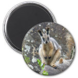 yellow footed wallaby 2 inch round magnet