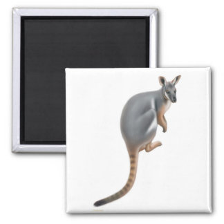 Yellow Footed Wallaby Magnet