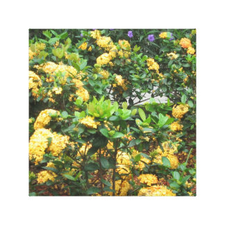 Yellow fowers canvas print