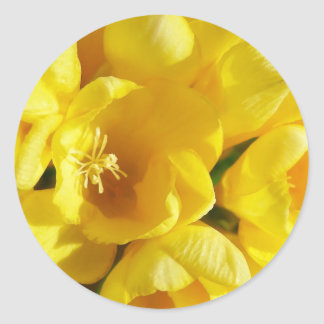 Yellow Freesia Classic Round Sticker