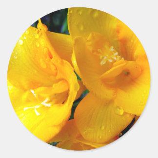 Yellow Freesia Classic Round Sticker