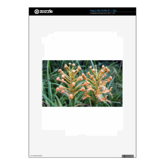 Yellow Fringed Orchid Platanthera ciliaris iPad 2 Skin