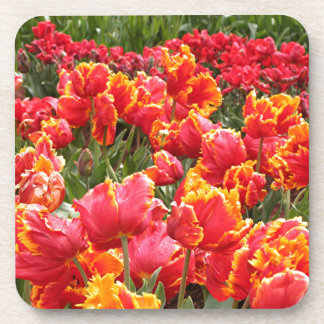 Yellow fringed red tulips drink coaster