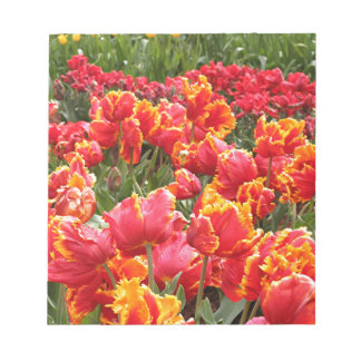 Yellow fringed red tulips notepad