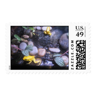 Yellow Frogs Postage Stamp