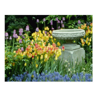 yellow Front garden of house in Westmount Quebec Post Cards