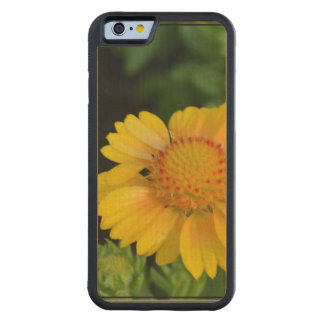 Yellow Gaillardia Carved® Maple iPhone 6 Bumper