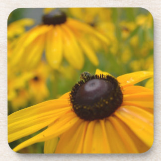 Yellow Garden: Black Eyed Susan Coaster Set