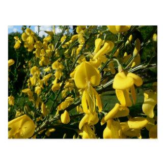 Yellow Garden Flowers Post Card