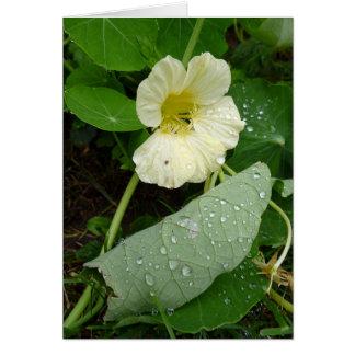 Yellow garden nasturtium flower greeting card