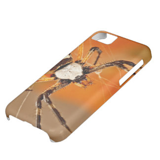 Yellow Garden Orb-Weaver Spider iPhone 5C Cover