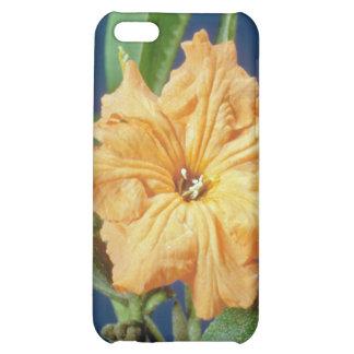 yellow Geiger tree (Cordia sebestena) flowers iPhone 5C Cases