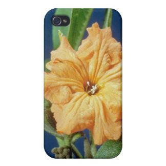 yellow Geiger tree (Cordia sebestena) flowers iPhone 4 Cases