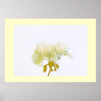 Yellow Geranium Poster