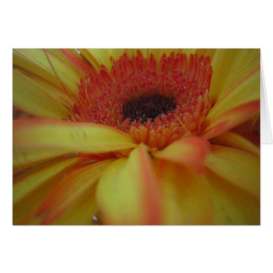 Yellow Gerber Card
