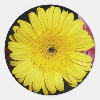Yellow Gerber Daisy Classic Round Sticker
