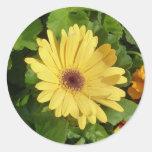 Yellow Gerber Daisy sticker