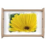 Yellow Gerber Daisy White Border