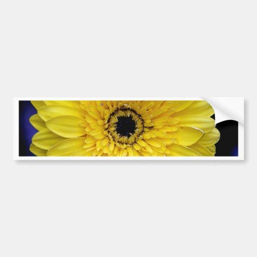 Yellow Gerbera Car Bumper Sticker