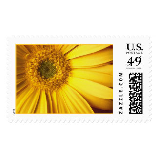 Yellow Gerbera Daisy Postage
