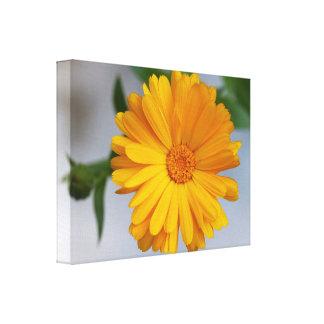Yellow Gerbera Daisy Wildflower Gallery Wrap Canvas