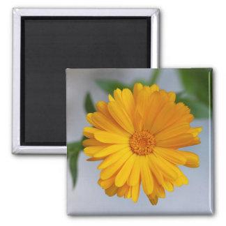 Yellow Gerbera Daisy Wildflower Magnet