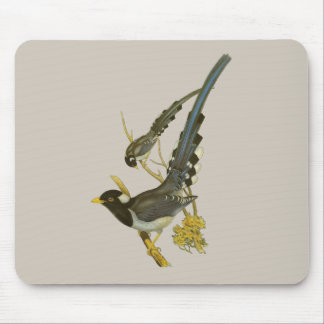 Yellow (Gold)-billed Blue Magpie Mouse Pad