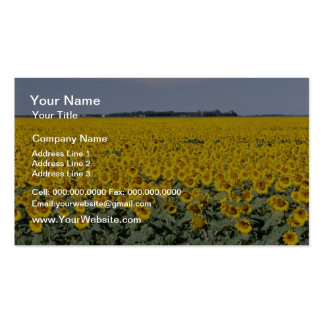 yellow Golden field of sunflowers, Manitoba flower Business Card
